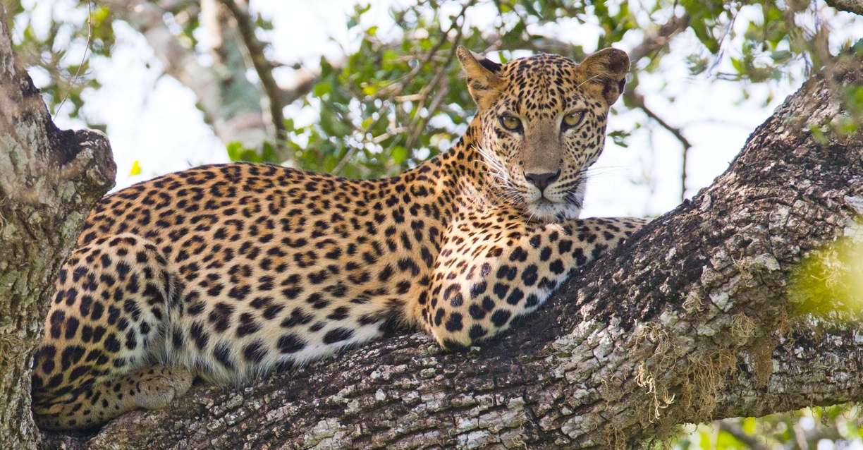 Sri Lanka Wildlife & Cultural Treasures