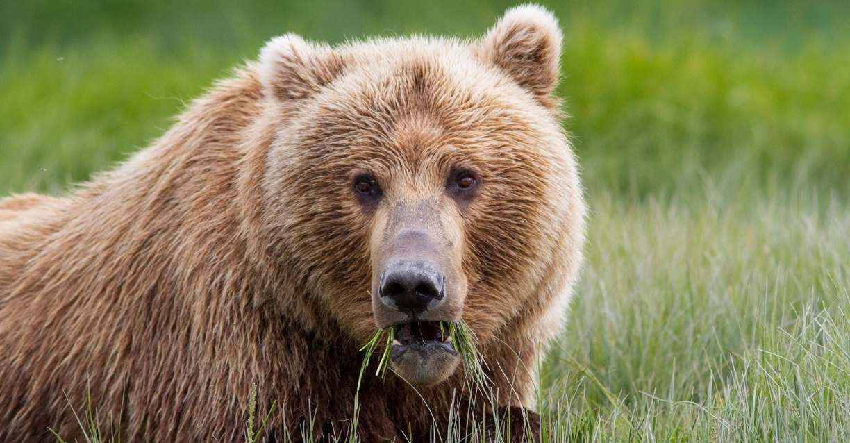 7a38c56bf47 The Great Alaskan Grizzly Encounter