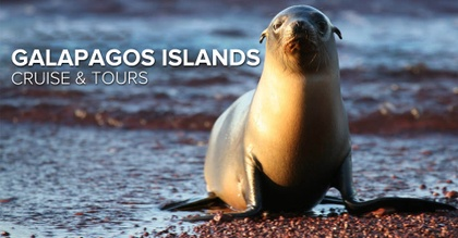 This Is A Galapagos Sea Lion