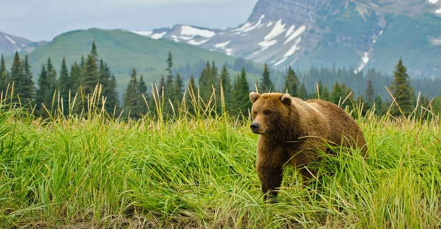 Alaska, Canada & Northern Adventures