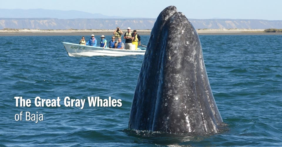 Whale Watching Mexico | Mexico Ecotourism | Natural Habitat